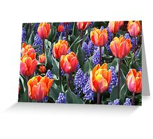 Princess Irene Tulips ~ Skagit Valley Greeting Card