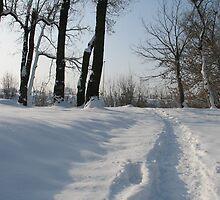 Snowy path by branko stanic