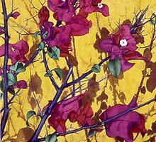 Yellow and Magenta by soonywarren