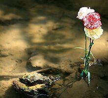 Carnations in water by Erik Anderson