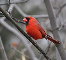 All Dressed in Red by Corkle