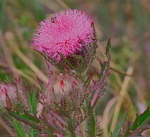 Horrible Thistle by Mike Fischetti