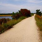 Walking and Bike Path Through Marsh by Judith Hayes