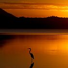 Heron Heaven - Lake Weyba Queensland Australia by AMP  Al Melville Photography