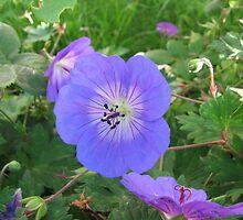 Blue Beauty - Summer Flower by BlueMoonRose