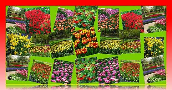 Postcards from Holland - Dutch Bulbs by BlueMoonRose