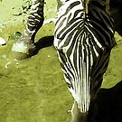 You Can Lead A Zebra To Water  by Diana Sénèque