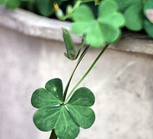 A Drop of Luck by yolanda