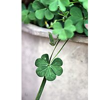 A Drop of Luck Photographic Print
