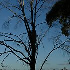 Tree with Birds- Langwarrin by Portia Greenwood
