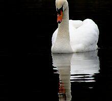Mute swan by Debbie Ashe
