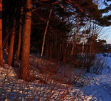 A wondrous light of sunset glare by arvyart