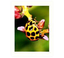Pretty Ladybug Art Print