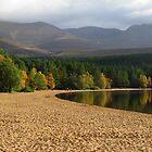 Loch Morlich Treeline by Tazfiend