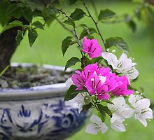 Oriental Bonsai 2 by Mark Bolton