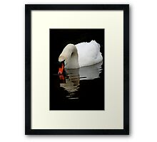 Mute Swan V Framed Print