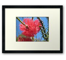 Bright Bottle Brush Framed Print