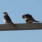 Love of Swallows by Karlientjie