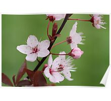 Blossoms in Green Poster