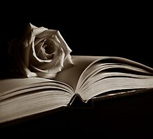 Literary Rose by Michael Mars