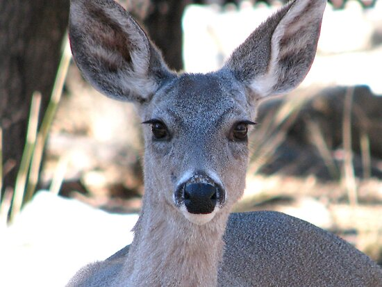 Cous deer by Sherry Pundt