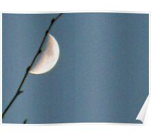 Moon blossom Poster