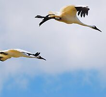 A Duo Matched in the Air by Franklin Lindsey