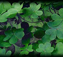 Grunge Clover by Ellen Cotton