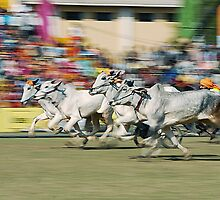 The Bullock Cart Race by RajeevKashyap