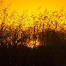 Sun fire amongst the grass by Fineli