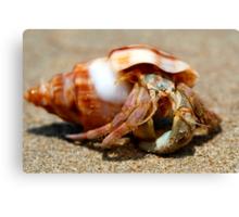 Crowdy Bay Hermit Crab Canvas Print