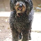 Ruby, the shaggy black dog by Geni29