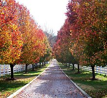 Autumn Leaves on a country road farm in Virginia by Rick Short