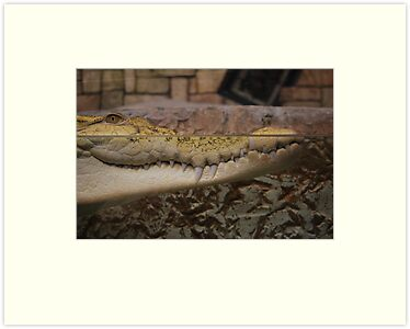 Golden Crocodile Smile by Roxanne Persson