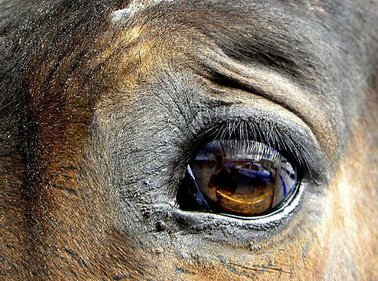 Eye Of The Horse by venny
