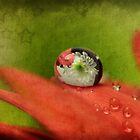 Butterfly Dreams by Ann  Van Breemen