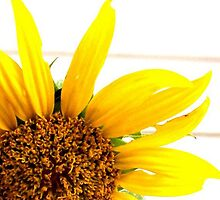 SUMMER SUNFLOWER  by Terra 'Sunshine' Gilbert