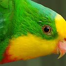 Superb Parrot by Gabrielle  Lees