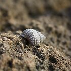 caracol1 by seemorepr
