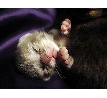 Brand New Baby Kitty Photographic Print