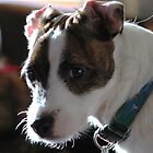 smudge the dog by David Ford Honeybeez photo