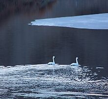 Snow Geese in B&W by © Betty E Duncan ~ Blue Mountain Blessings Photography