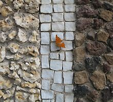 Villa D'Este Butterfly by CricketArt