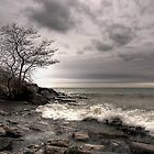 The tree - Humber Bay Park Toronto by Eros Fiacconi (Sooboy)