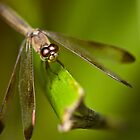 Dragonfly by Benson Lam