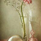 Gerbera daisy by Mandy Disher
