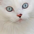 Blue Eyed Cat by JimGuy