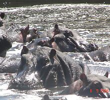 HIPPOS by NASEEM SULEMAN