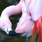 Pink Flamingo  by Roi  Brooks