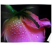Pearl Rose. Poster